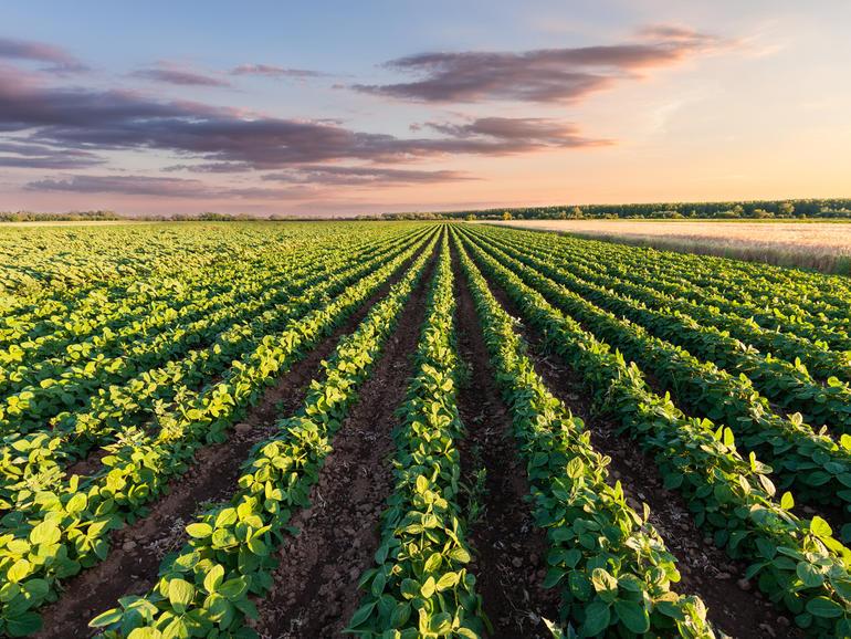 Cómo se está utilizando la IO para la agricultura australiana en 2019